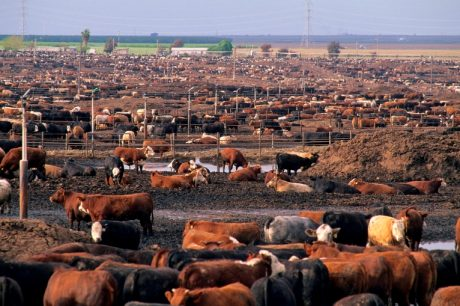 How Shit Happens, or, How Audit Systems and Sewer States Lead to Tainted Beef
