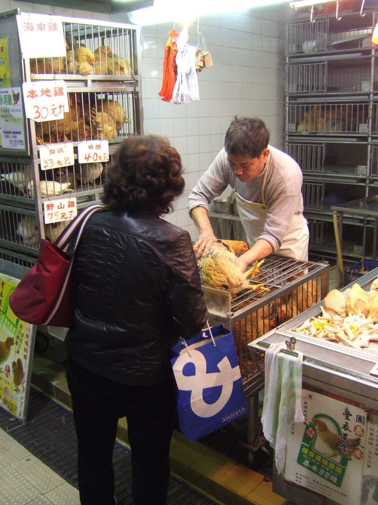 A customer checks the health of a chicken in a live poultry market.